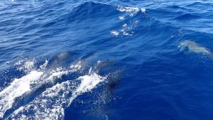 Flere delfiner!