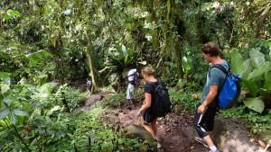 Vi vandrer gennem regnskoven
