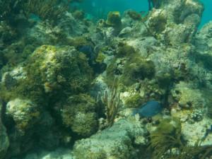 blå fisk flotte - Kopi