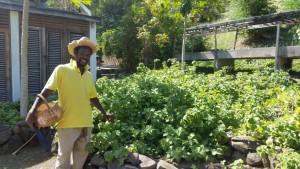 Vores guide i plantagen på Bequia