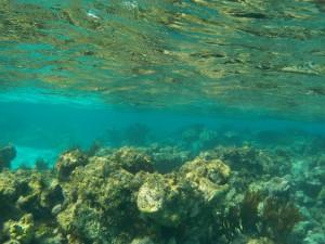 Bemærk bølgerne i overfladen - vi er ved revets afslutning --> Atlanten er lige på den anden side!