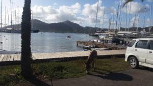 Æsel & superyachts - den mest naturlige kombination på en havn!