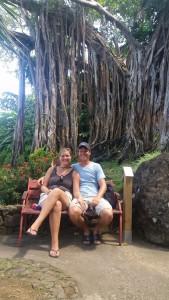 Barbados-træet