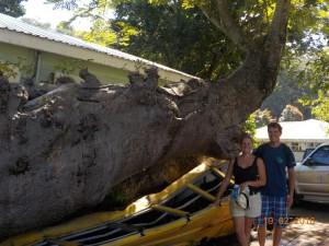 Bus blev kvast under et træ i orkanen 1979
