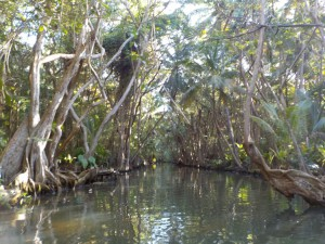 På sejltur i junglen - Indian River