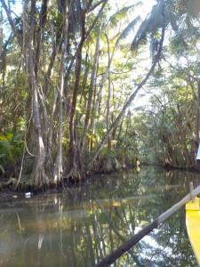 Stille og roligt på Indian River