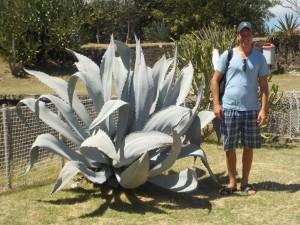 Martin og en kæmpe plante