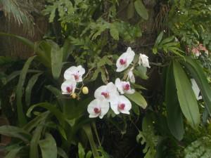 Orkideer vokser på træerne